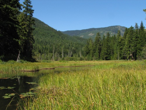 One of the many wetlands that AWARE has helped protect over the years. Photo: Bob Brett