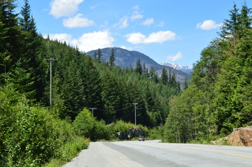 Heading north from Whistler, just before the Soo Valley turnoff, you can clearly see some trees that stand well above the rest of the forest. They are a few of the survivors of a massive forest fire from the mid-1920s, that destroyed much of the surrounding slopes. these few survivors would have provided the seeds to regenerate the forest that has returned to the burned area.
