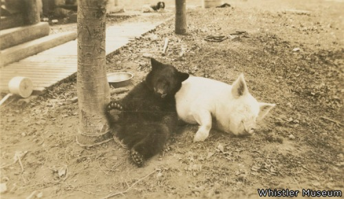 Quite possibly the cutest photo in our archives, or anywhere else for that matter. Best buds Molly & McGee share a laugh at Parkhurst Logging Village, circa 1937.