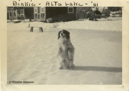 Binkie on Alta Lake, 1941. Philip Collection.