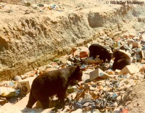 Bears in the garbage dump (future site of Whistler Village), ca. 1965. Petersen Collection.