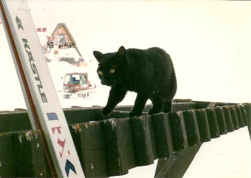Growing up in the alpine, Schoki was tough and loved the snow. Photo courtesy: Janet Love Morrison, Gordy Rox Harder